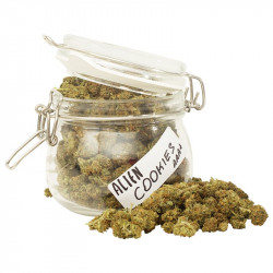 Buy Alien Cookies Online in Canada - LadyJane