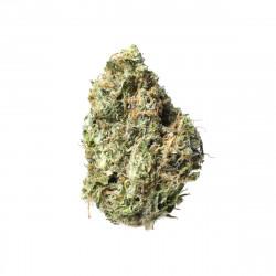Golden Goat | Buy Marijuana Online in Canada | LadyJaneExpress