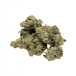 Buy Frosty Blue Cheese Weed Online