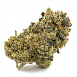 Buy Purple gorilla AAAA Canada